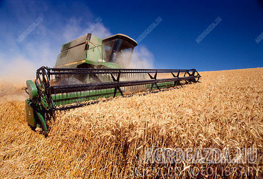 Wheat-Harvest-5.jpg